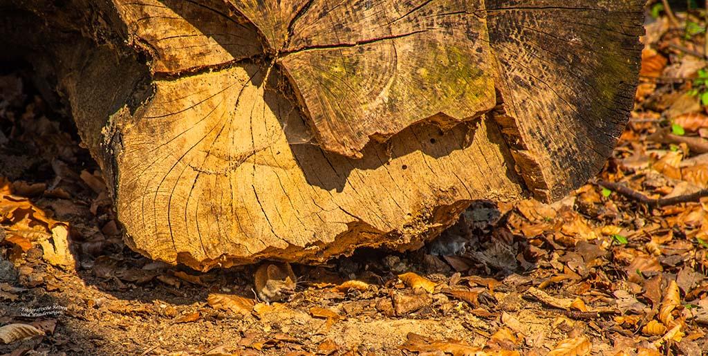 Zwei Mäuse unter einem Baumstamm