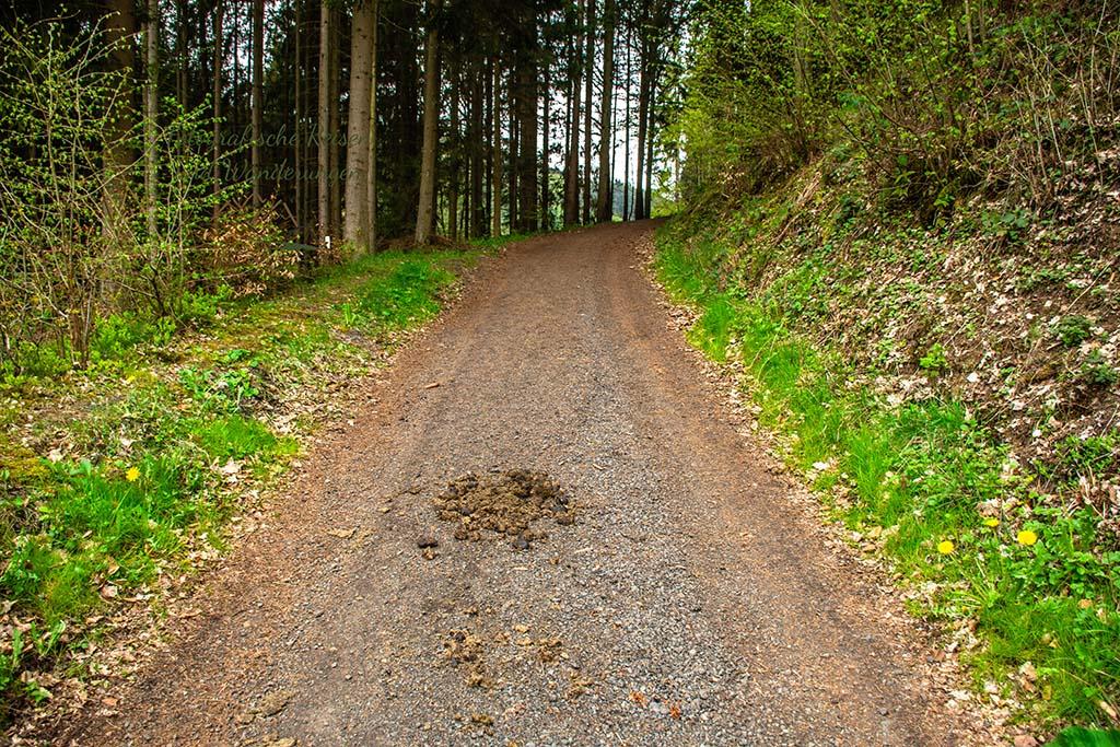 Ein bergab führender Weg-Eifelsteig wandern