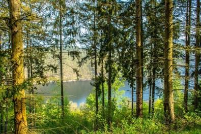 Blick auf den Obersee durch die Bäume