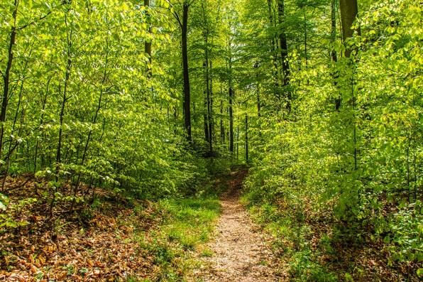 Kuscheliger Waldwanderweg -Eifelsteig zwischen Gemünd und Kloster Steinfeld