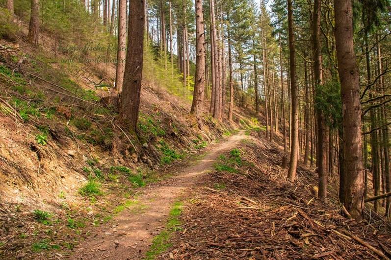 Herrliche Waldwege - Eifelsteig zwischen Monschau und Einruhr