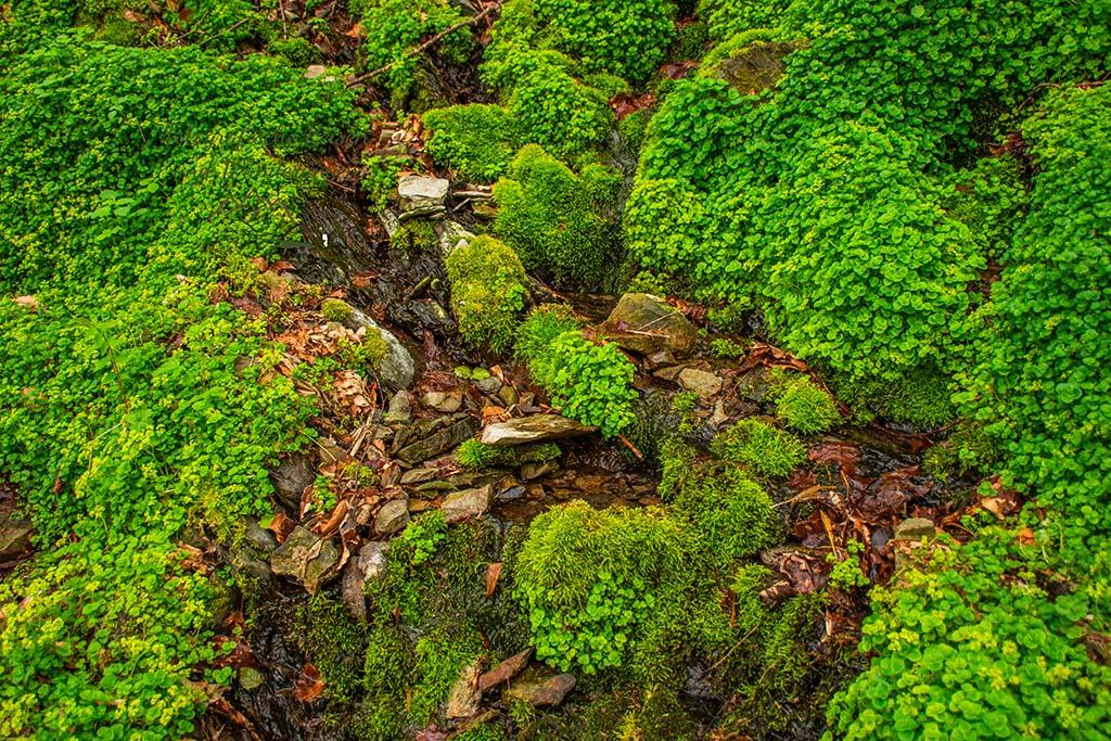 Wasser zwischen Stein und Moos