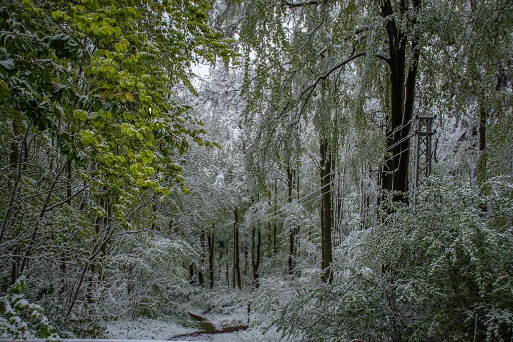 Helles grün und der weiße Schnee - Winter im Mai