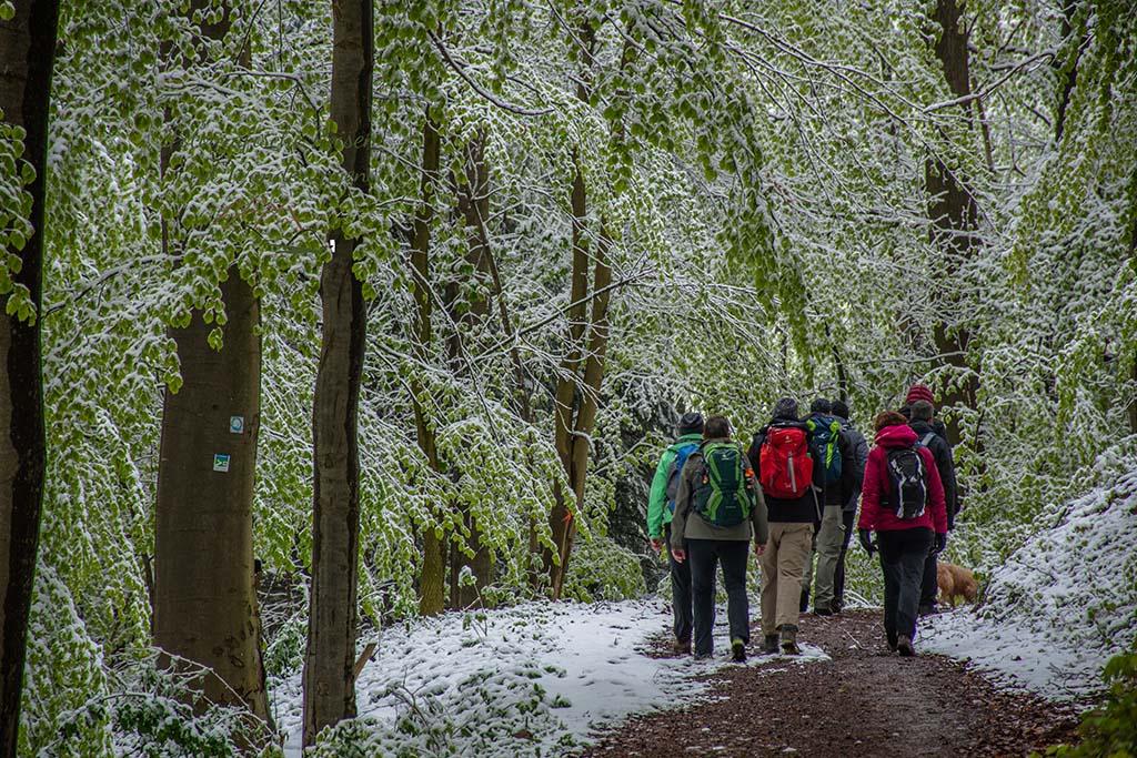 Noch mehr Wanderer durch den Winter im Mai auf dem Eifelsteig