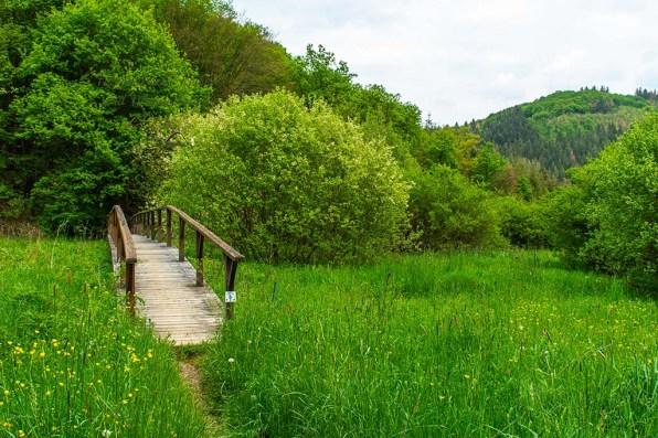 Brücke über das Biotop