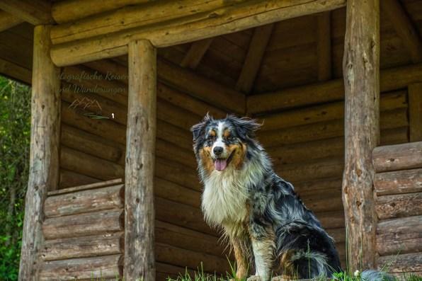 Shaggy an Hochsimmerhütte