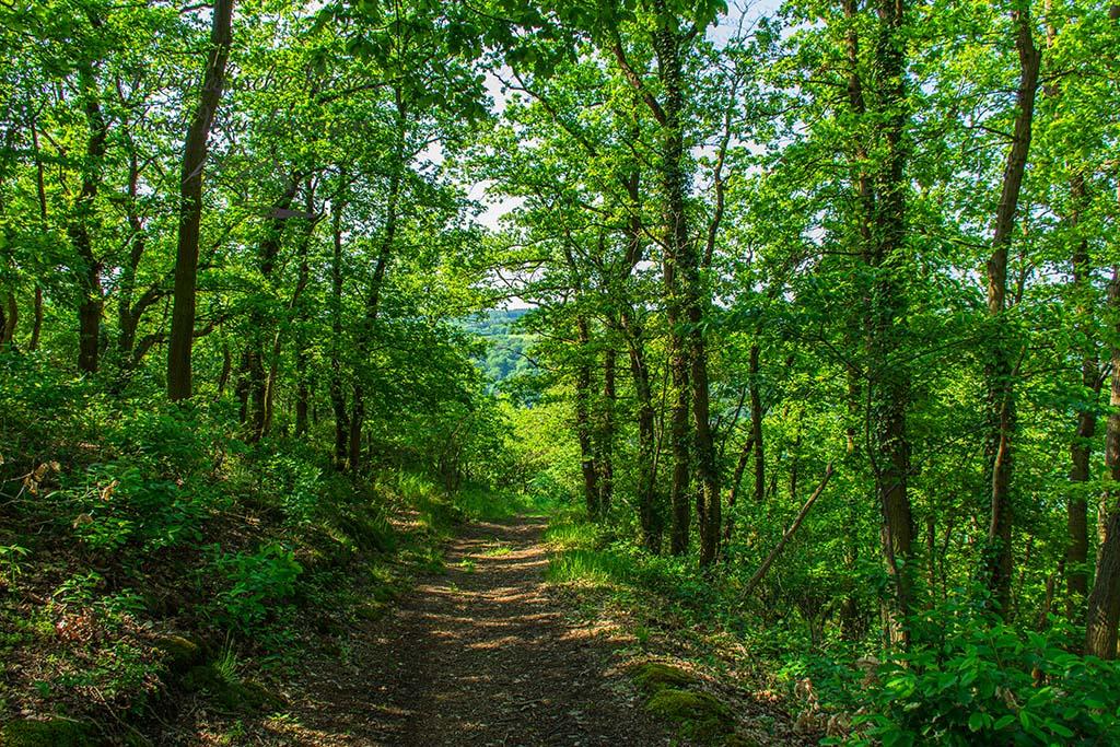 Und wieder ein kleines Stück Wald