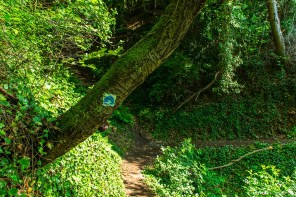 Traumpfädchensymbol am Baum