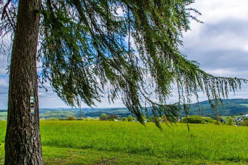 Blick auf die ländliche Umgebung Gackenbachs