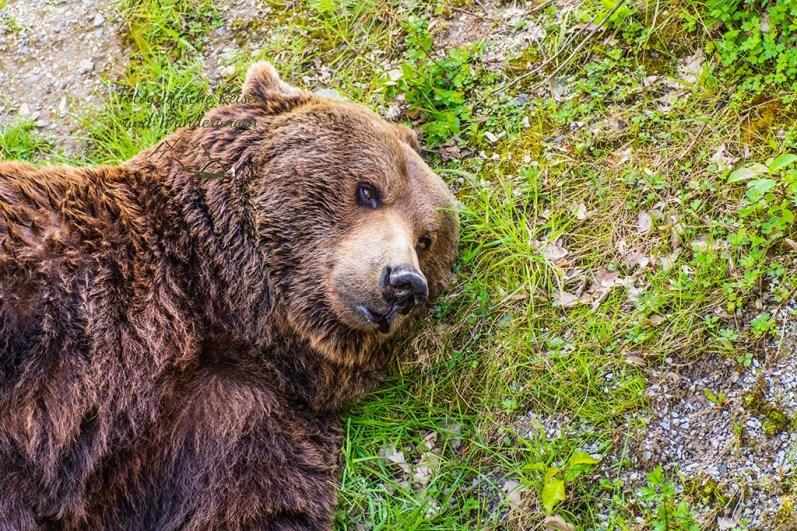 Bärenstark Wild- und Freizeitpark Westerwald