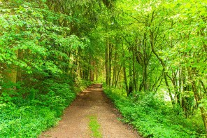 Schattiger Waldweg