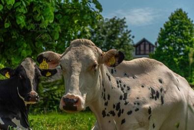 Viehwirtschaft