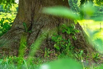 Durchblick auf Baumstamm
