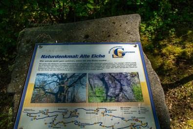 Geschichte der Alten Eiche