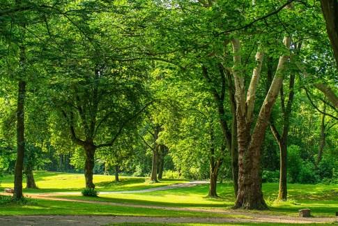 HJohe Bäume - Grüne Oasen im Ruhrgebiet - Von Wedelstaedt Park