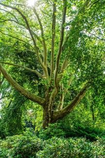 Grüne Oasen im Ruhrgebiet - Von Wedelstaedt Park