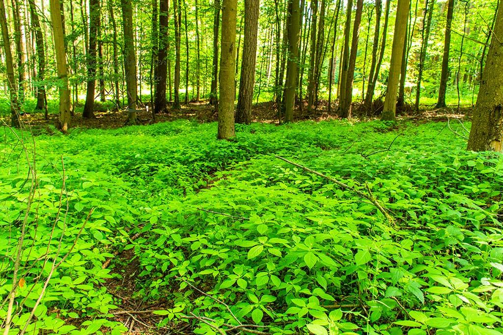 Ein schmaler Pfad durch den dicht bewachsenen Wald