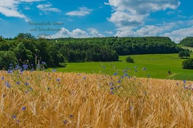 Getreidefelder mit Kornblumen