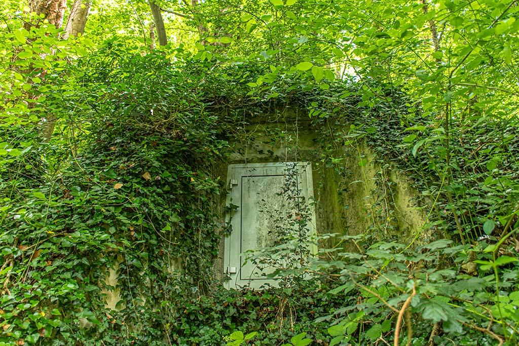Eine Tür im Wald