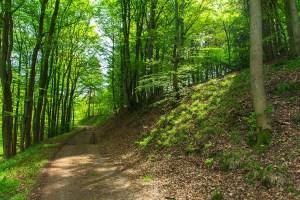 Waldwege oberhalb des Nettetal