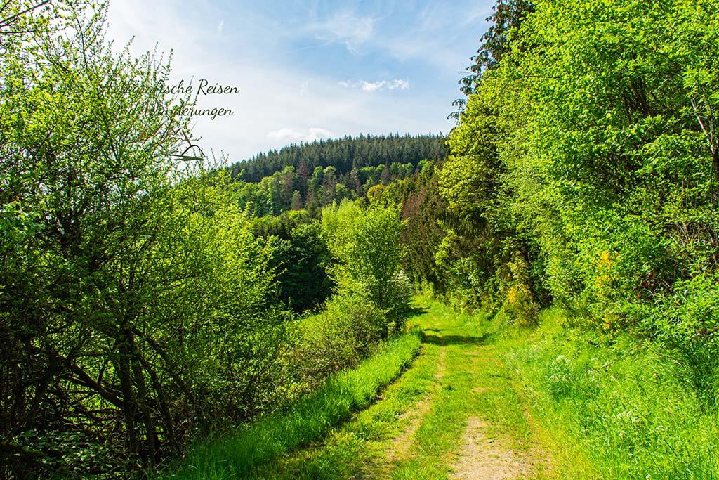 Wiesenwege und Wacholderheiden in der Eifel