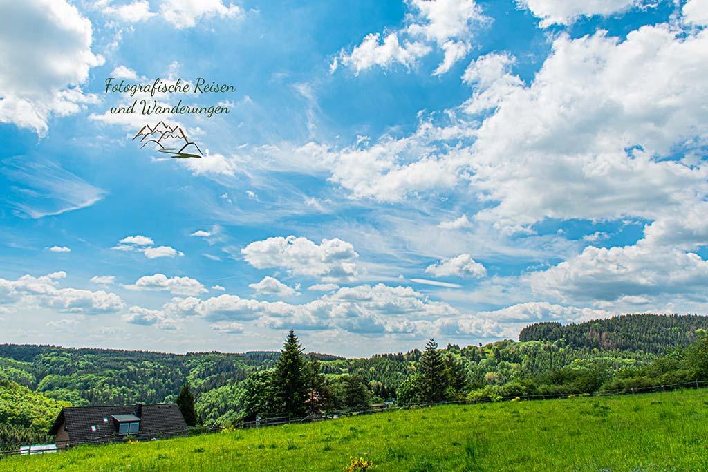 Wacholderheide in der Eifel