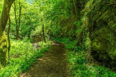 Gemütliche Waldwege