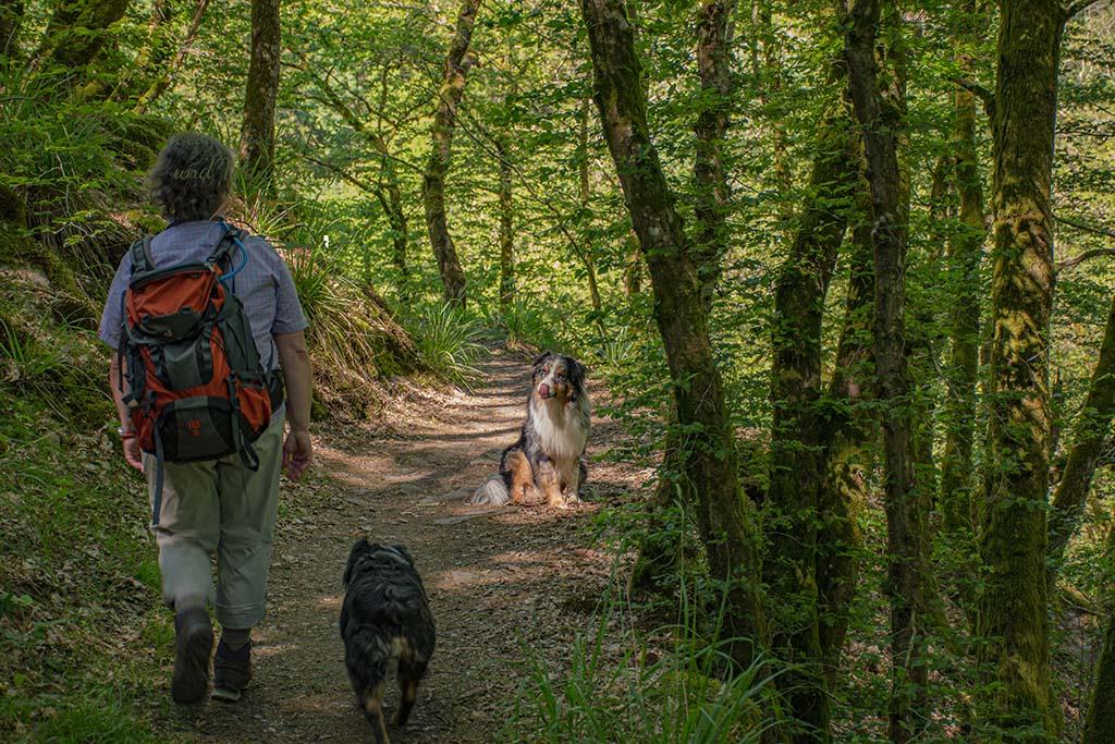 Wandererin und zwei Hunde