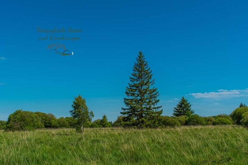 Einzelne Bäume ragen in der weiten Landschaft auf