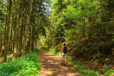 Lichter Waldweg