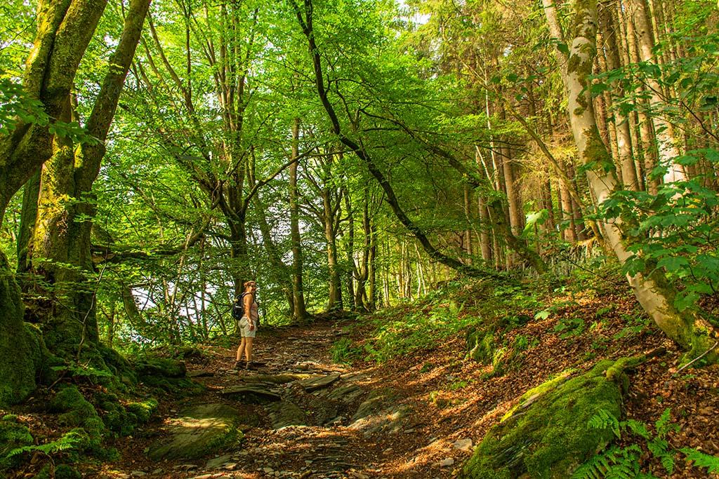 Der Jahrhundertweg in Monschau