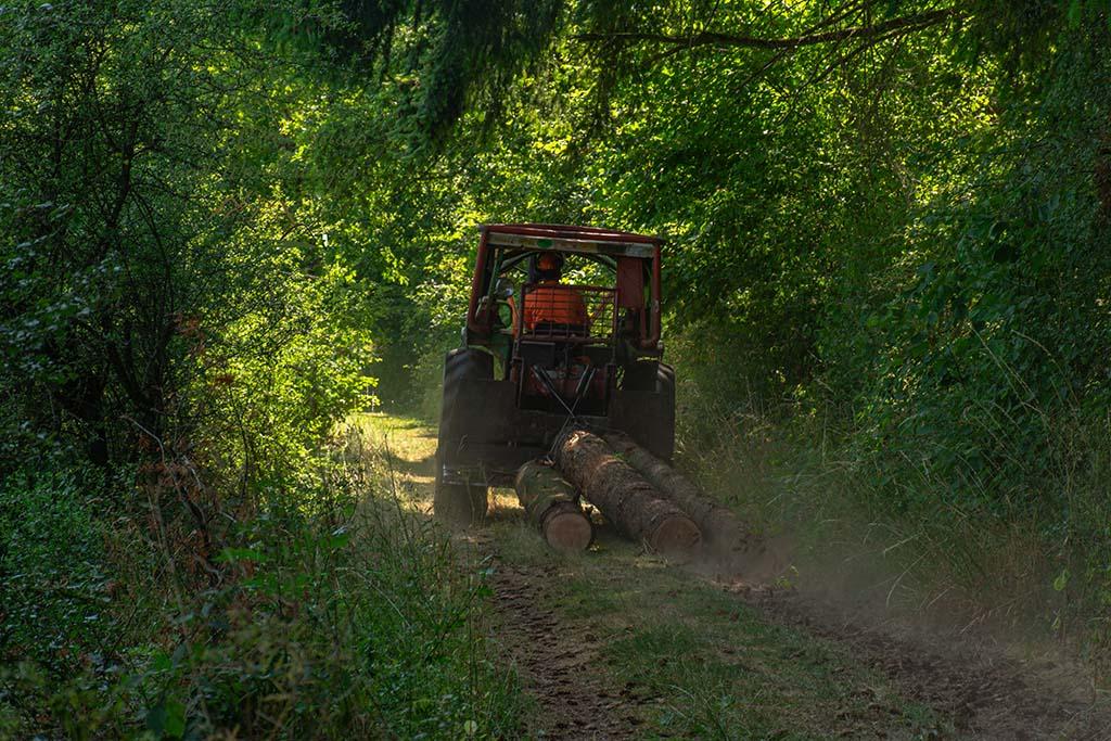 Baumstämme werden durch den Wald gezogen