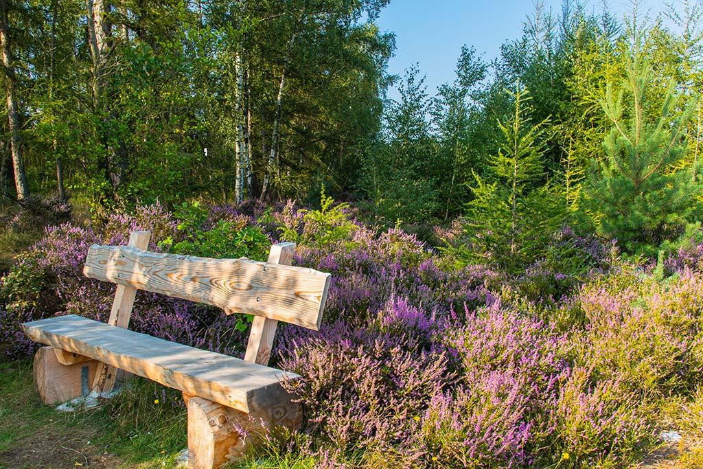Die Heide blüht - Drover Heide