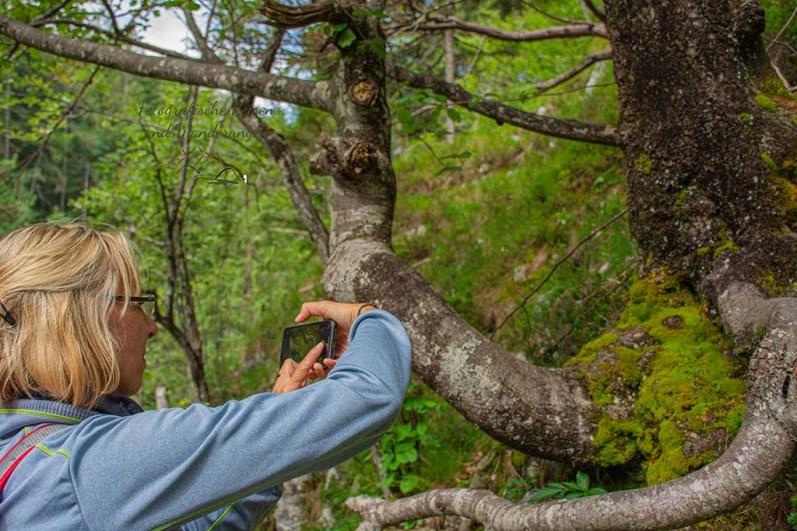 Bäume mit wundersamen Wurzeln