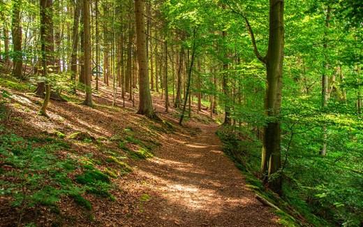 Auf schmalen Pfaden durch das Naafbachtal wandern
