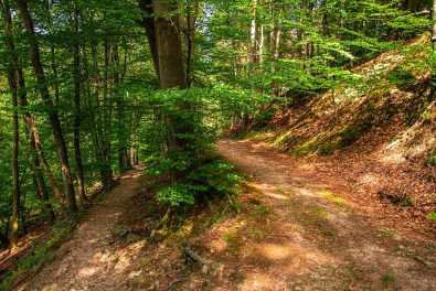 Auf Pfaden durch das Naafbachtal (146)