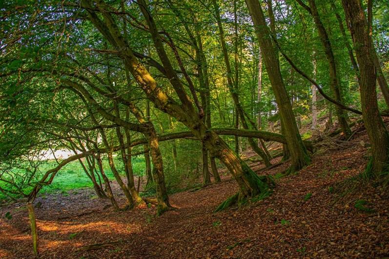 Waldgebiet - Naafbachtal Wandern