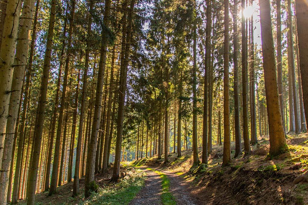 Wäldchen und Sonne - Wandern im Sauerland