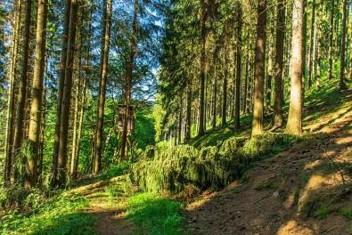 Schattiger Waldweg - Wandern im Siegerland
