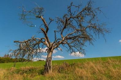 Dürre Bäume