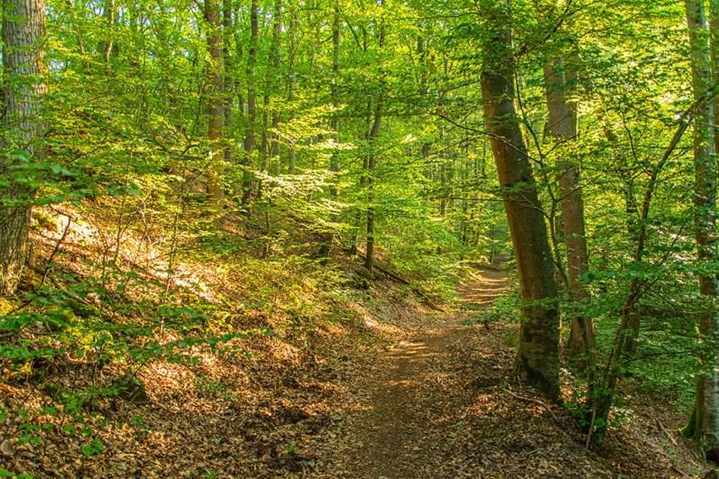 Durch den Wald - Vom Teufelsberg zur Caaner Schweiz