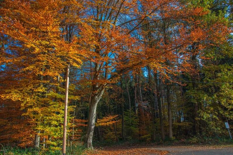 SO bunter Herbst