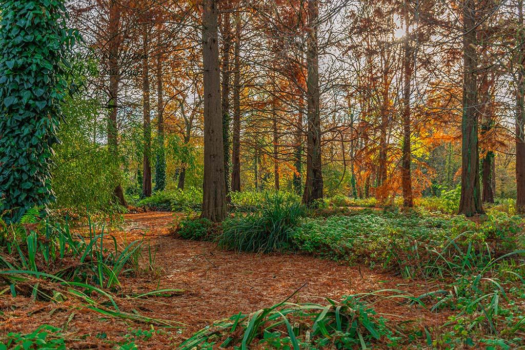 Herbst im Wäldchen an der Stadtparkinsel Grevenbroich