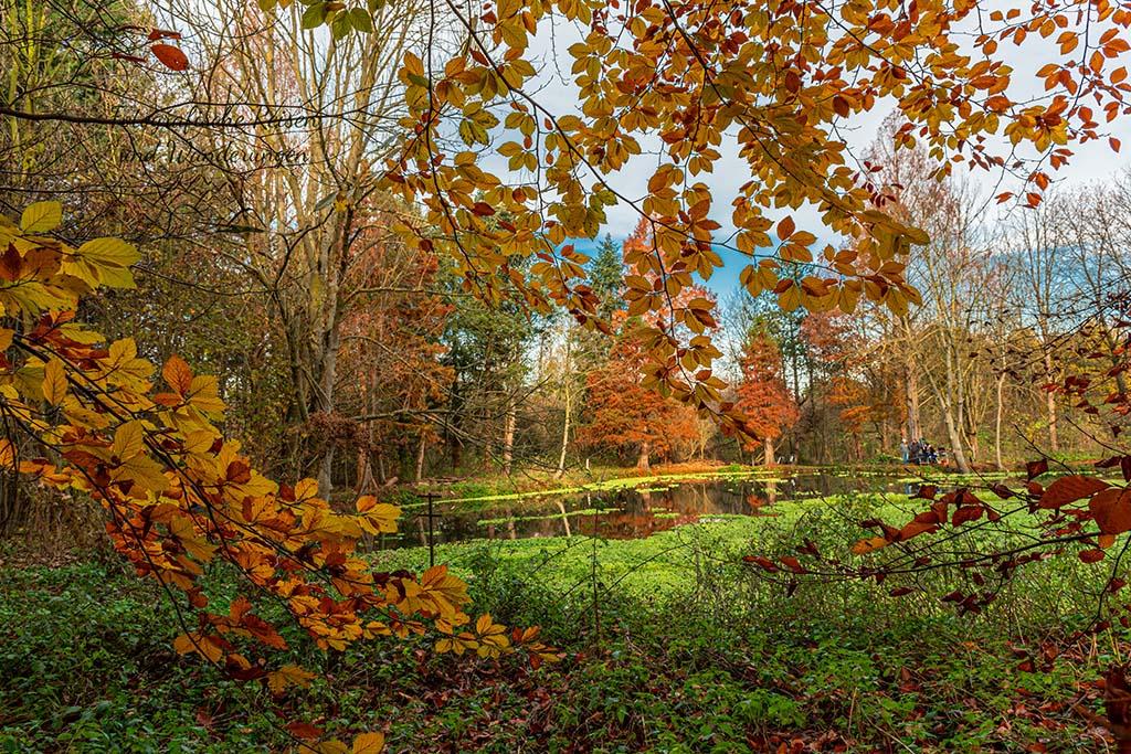 Dohmer Loch