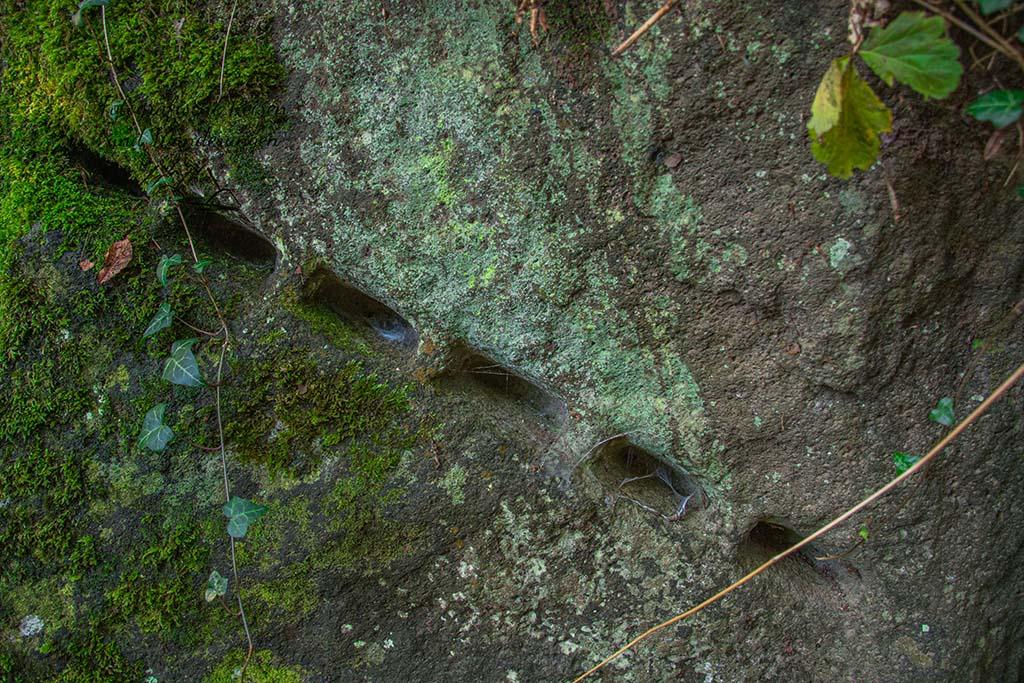 Spuren der Keiltaschenspaltung - Krimineller Spaziergang im Rauscher Park