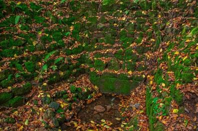 Hechtborn, Quelle im Wald