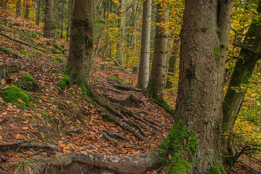 Wurzelpfade durch den Wald von Britten