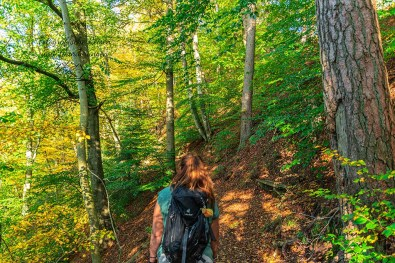 Waldweg Rund um das Ulmener Maar