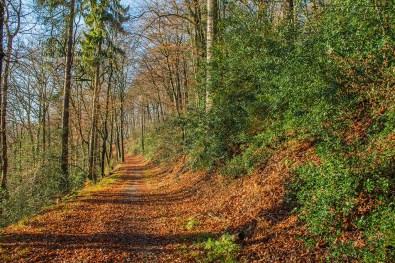 Herbststimmung im Arboretum Burgholz