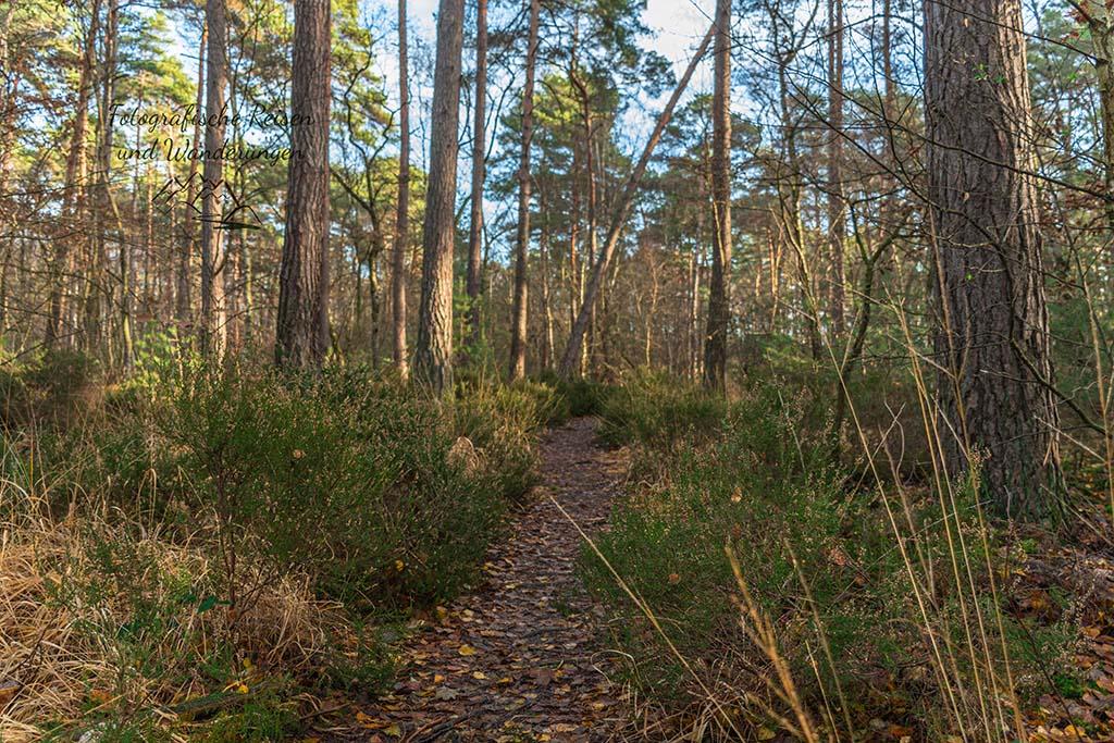 Heide auch im Wald